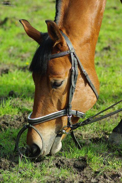 лошадиное лето питера