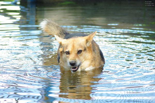 фотоистория одной собаки