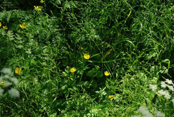 цветущее лето удельного парка
