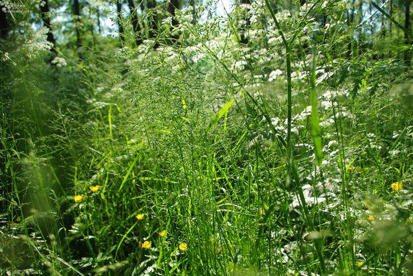 питерское цветущее лето