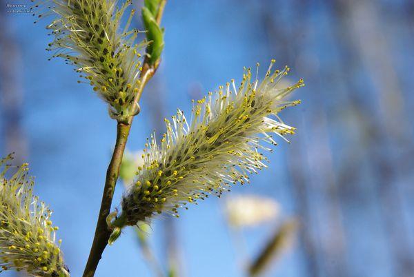 май цветы молодой шмель