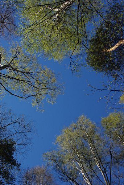 молодые листья и весна в удельном парке