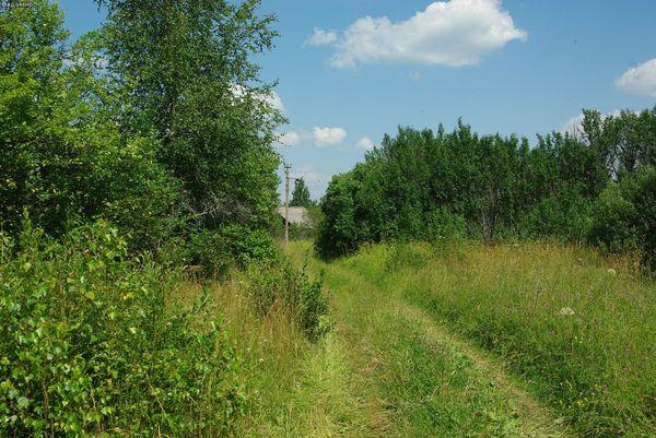 сельская дорога и русские поля