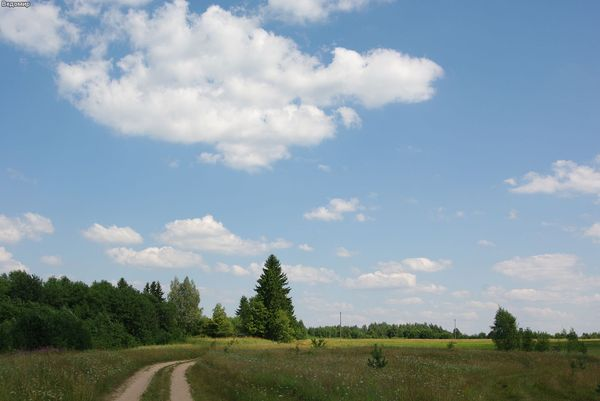 русская деревня дорога и поле летом