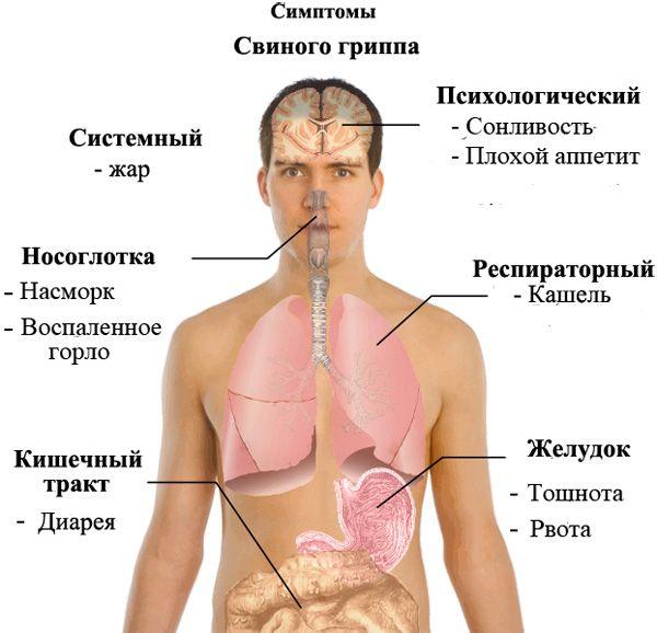 руководство по смерти от свиного гриппа
