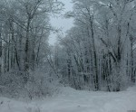 2010-01-10-winter-trees-0002--01