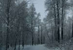 2010-01-10-winter-trees-0003--01