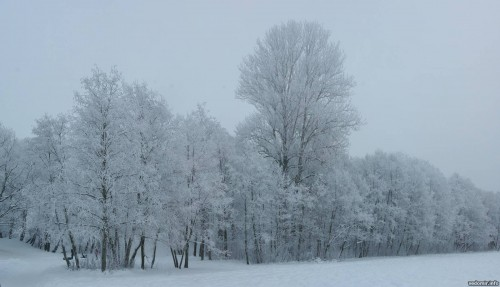 2010-01-10-winter-trees-0005