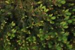 2013-06-01-spb-green-0009