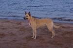 piter-sunset-dogs-0007