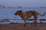 piter-sunset-dogs-0011