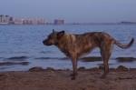 piter-sunset-dogs-0011