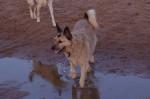 piter-sunset-dogs-0012