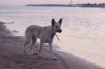 piter-sunset-dogs-0018