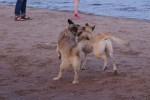 piter-sunset-dogs-0020