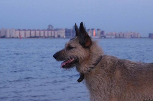 piter-sunset-dogs-0022