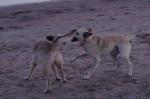 piter-sunset-dogs-0027
