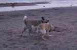 piter-sunset-dogs-0029