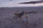 piter-sunset-dogs-0032