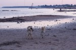 piter-sunset-dogs-0033