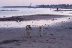 piter-sunset-dogs-0033